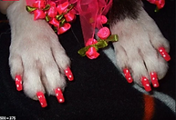 Dog nails.PNG