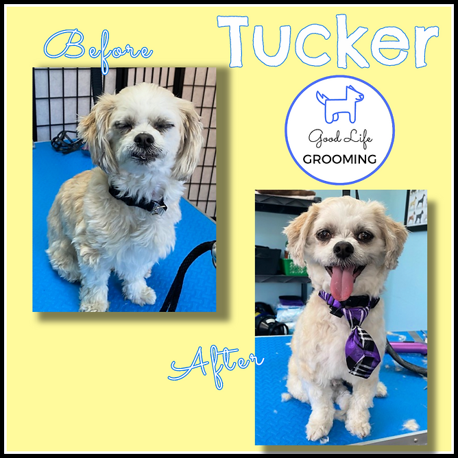 Tucker before after.png