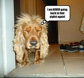 funny dog pic 2.PNG