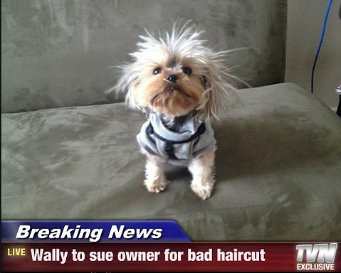 funny dog pic.PNG