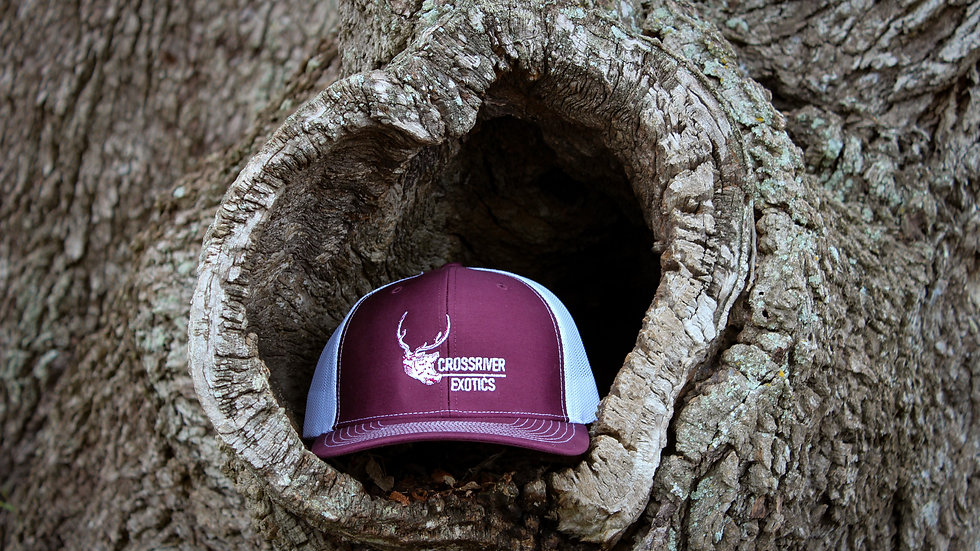 Maroon Axis Hat
