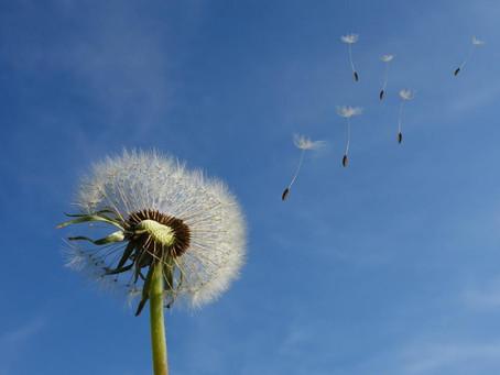 A favor del viento Proyecto Dignidad