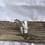 Thumbnail: Grace ring - size R