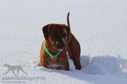 Maari Moyo Akinvoleezah Skiurlaub 2015 Guldner 21.jpg