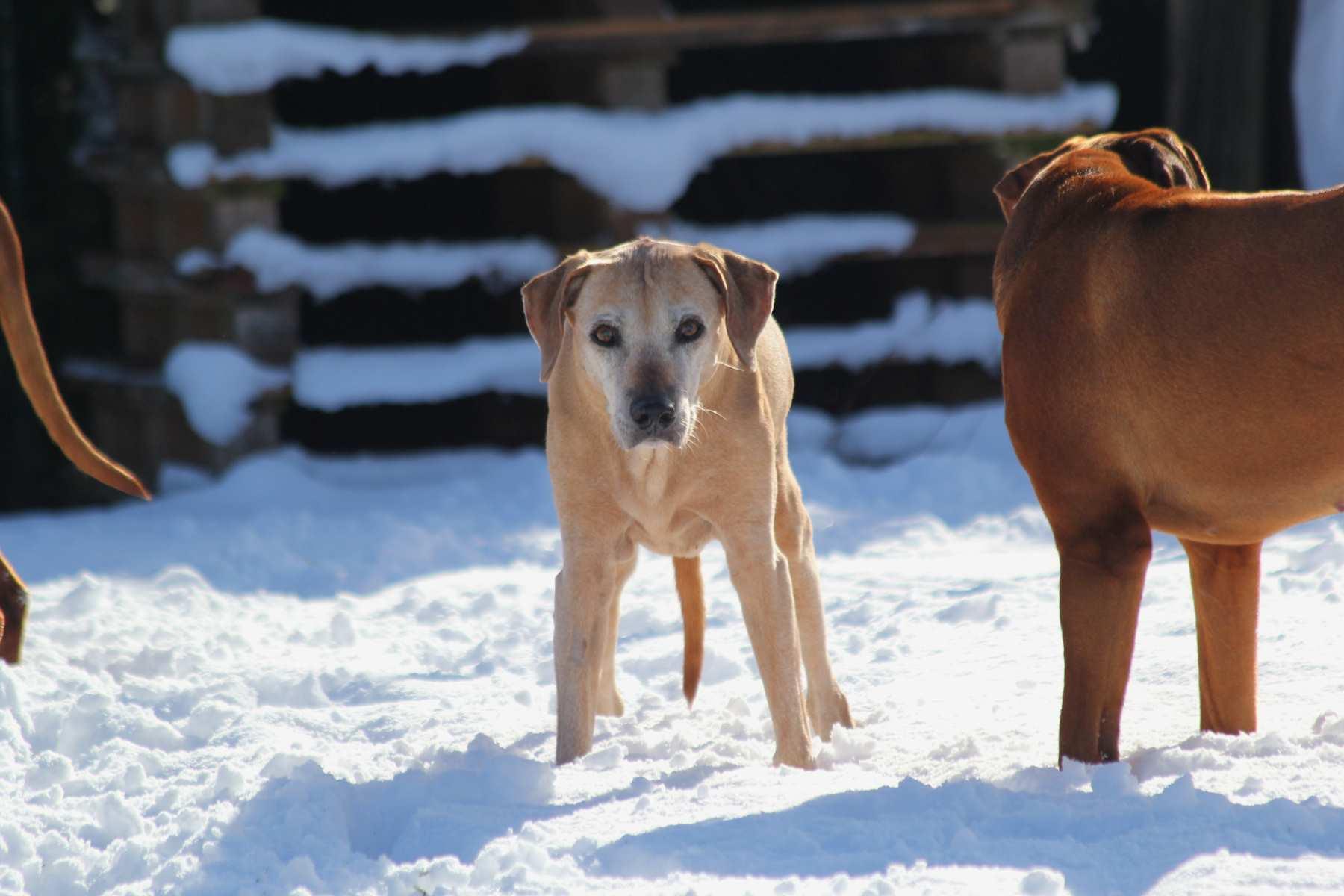 Hunde Garten 31.01.2019_003