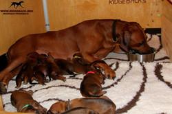 Jumay Babies 25.11.16b