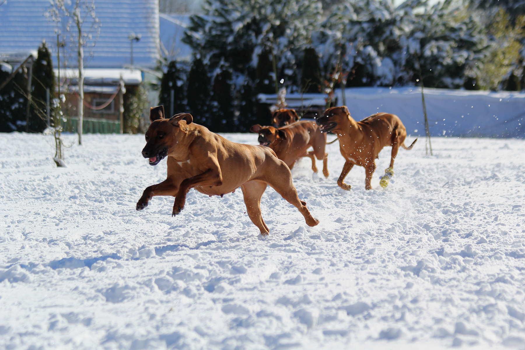 Hunde Garten 31.01.2019_007