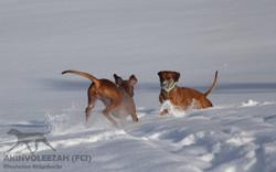 Akinvoleezah Skiurlaub 2015 Guldner 33.jpg