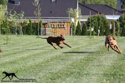 Akinvoleezah_spielende Hunde im Garten 8