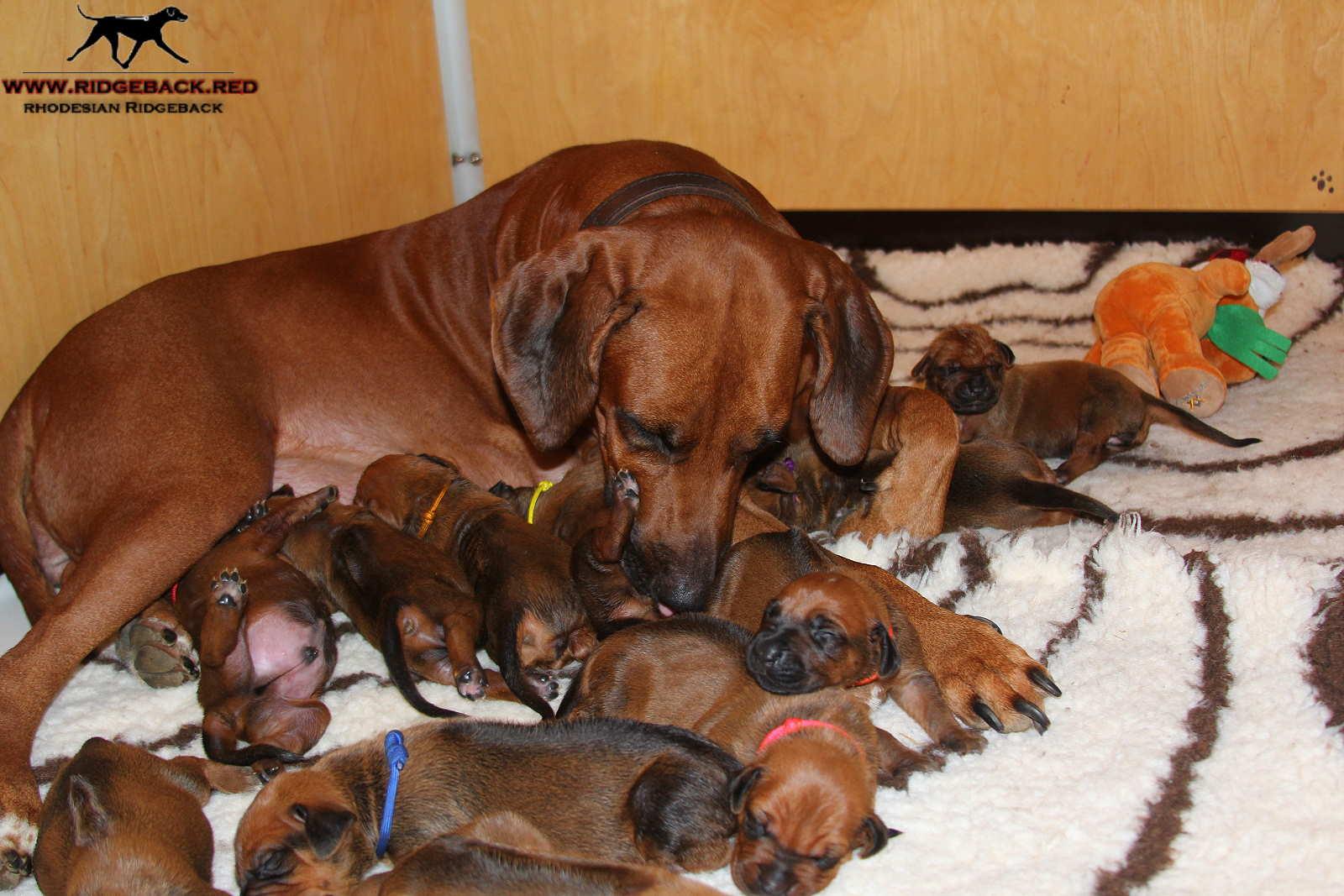 Jumay Babies 25.11.16s