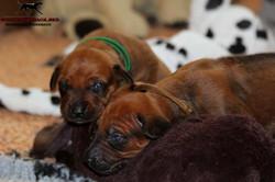 Jumay Babies 03.12.16_5