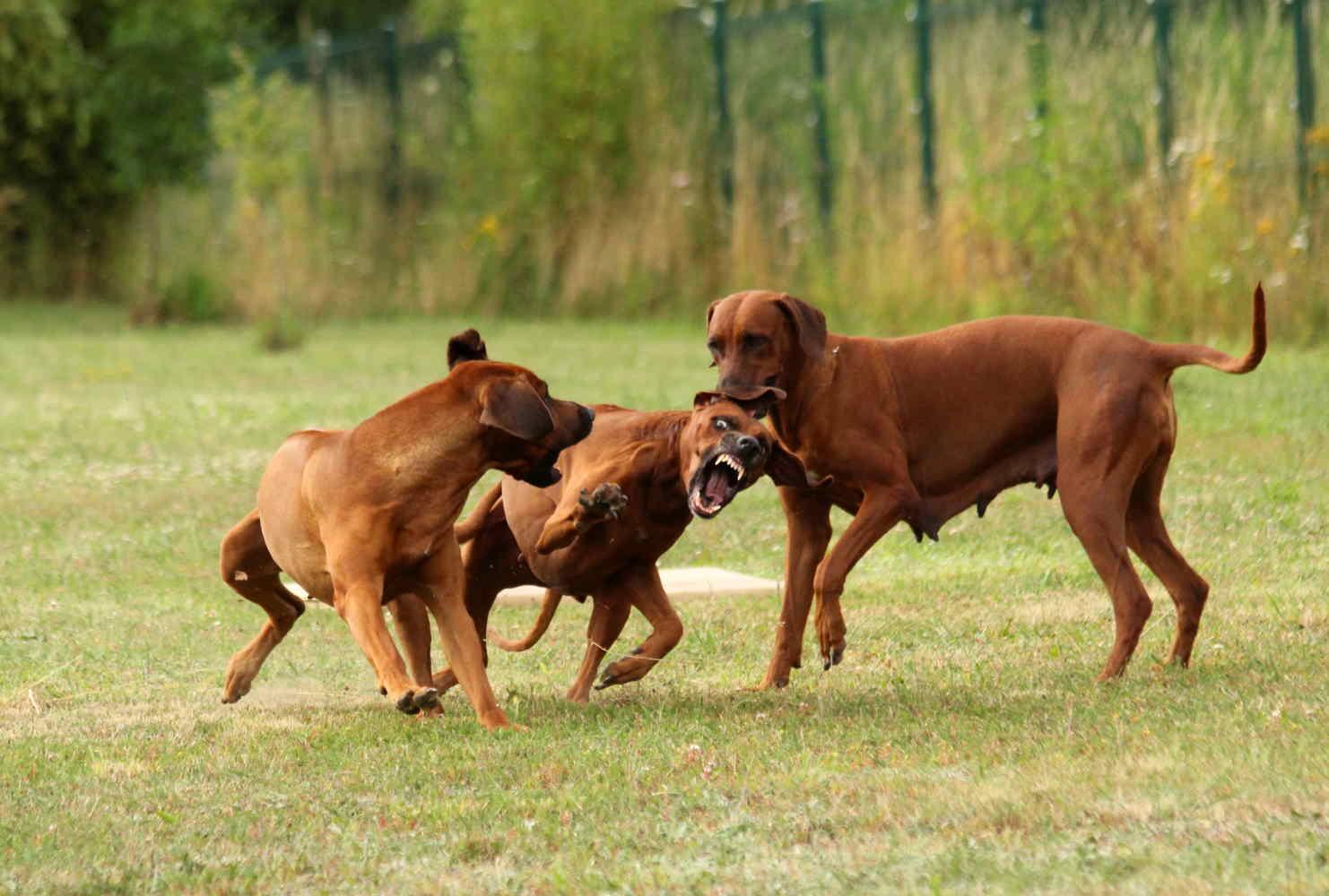 Hunde Juli9