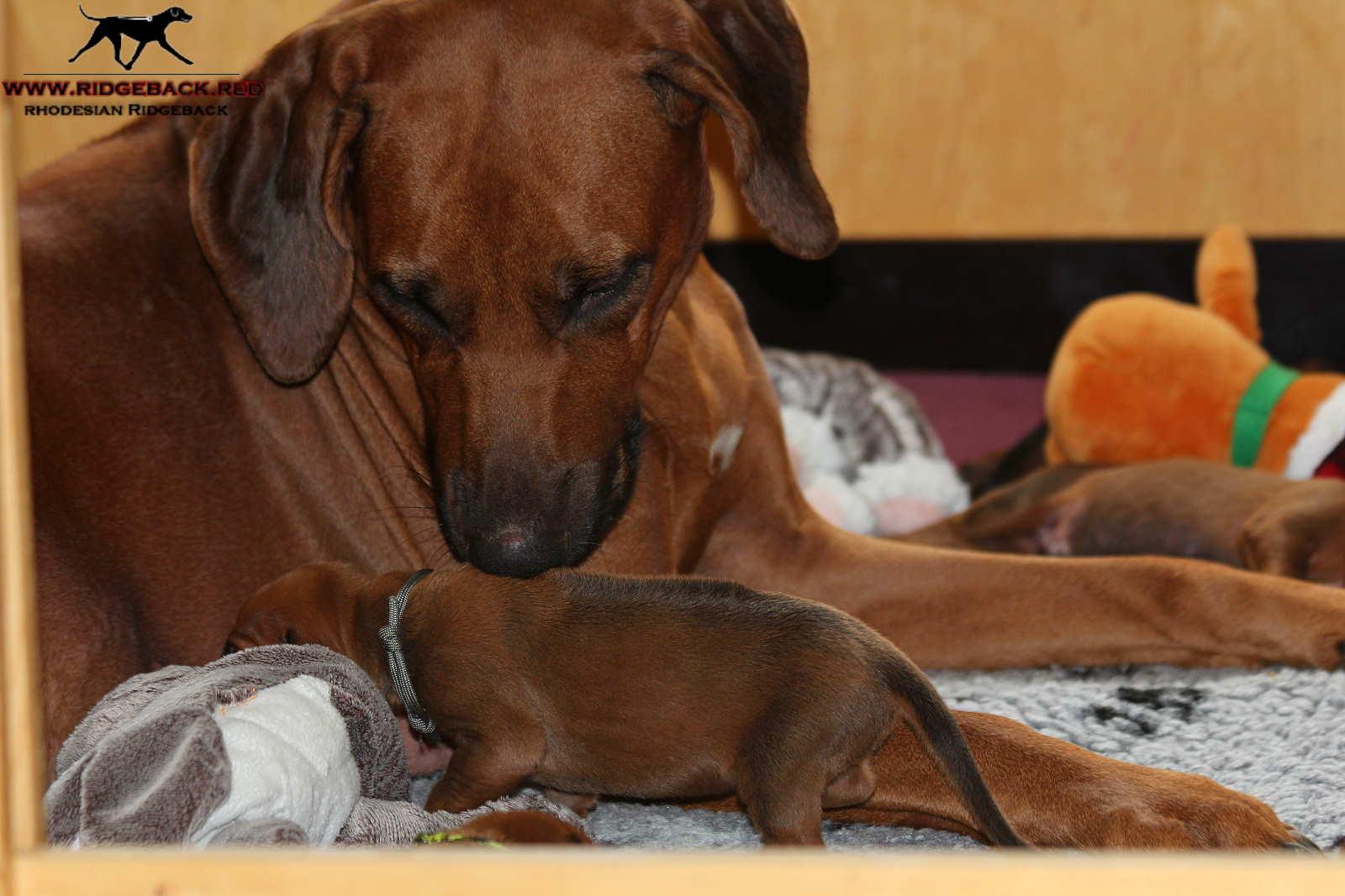 Jumay Babies 27.11.16_1