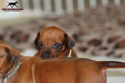 Jumay Babies 10.12.16_15