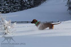 Maari Moyo Akinvoleezah Skiurlaub 2015 Guldner 118.jpg