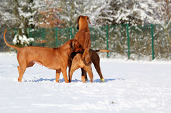 Hunde Garten 31.01.2019_0012