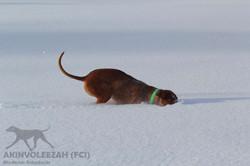 Maari Moyo Akinvoleezah Skiurlaub 2015 Guldner 8.jpg