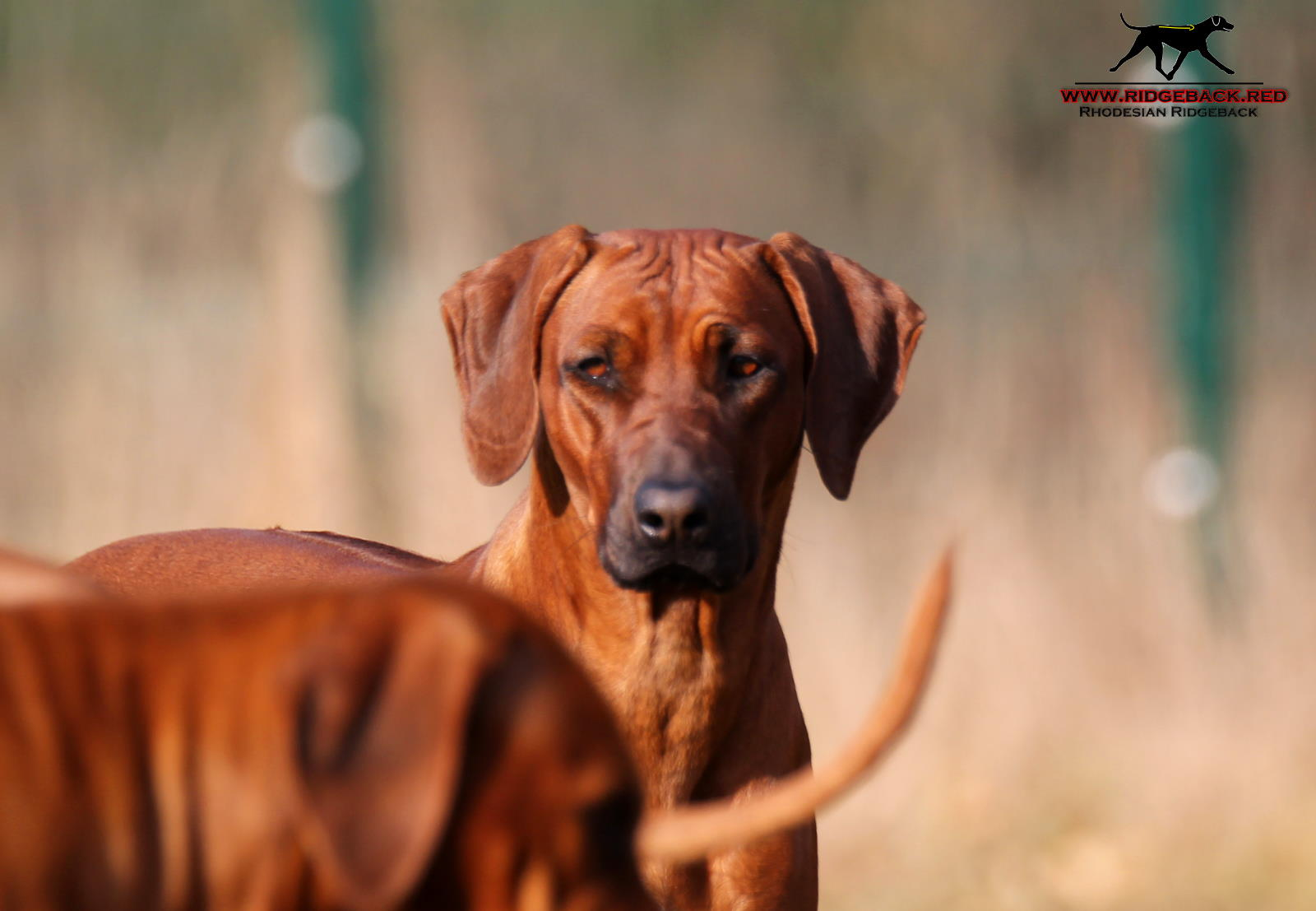 Hunde Akimo Akinvoleezah Februar 2017_8