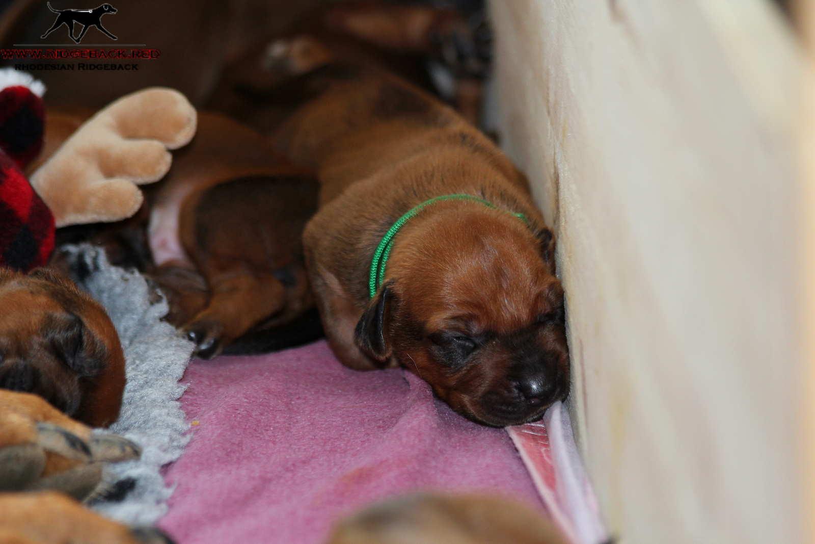Jumay Babies 27.11.16_9