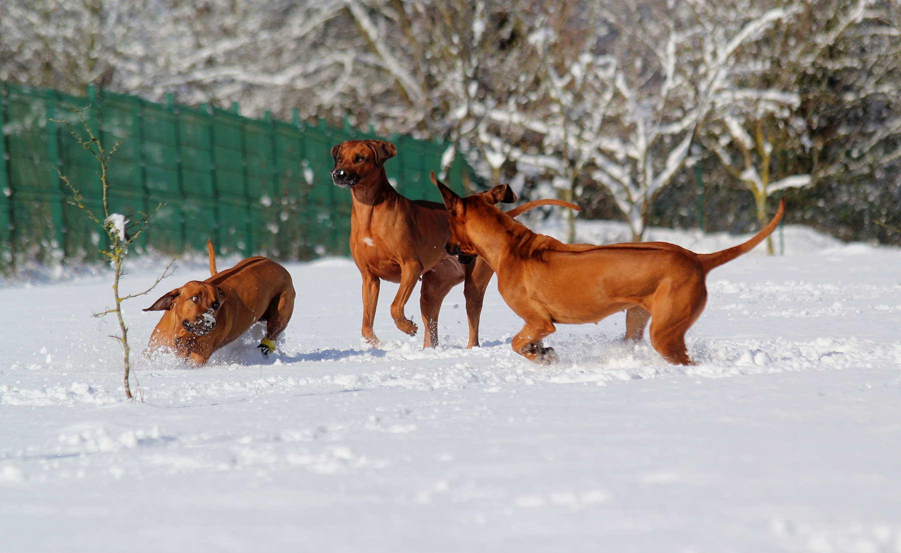 Hunde Garten 31.01.2019_0024