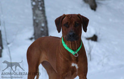 Maari Akinvoleezah Skiurlaub 2015 Januar 5.jpg