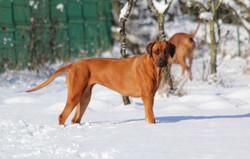 Hunde Garten 31.01.2019_0019