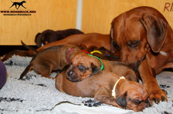 Jumay Babies 30.11.16_12