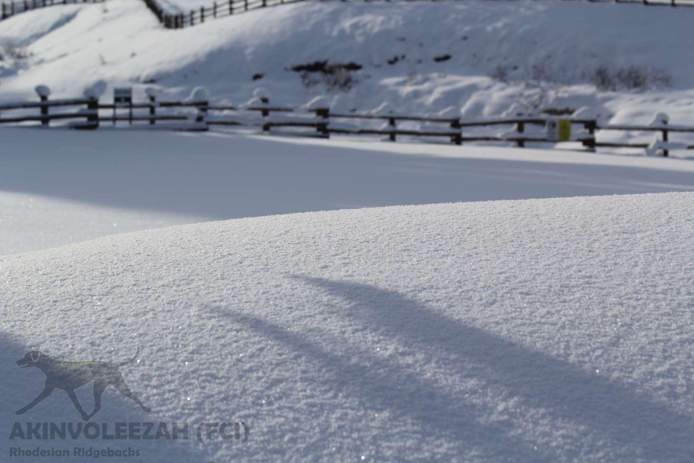 Corvara Skiurlaub Januar 2015 1.jpg