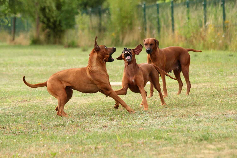 Hunde Juli8