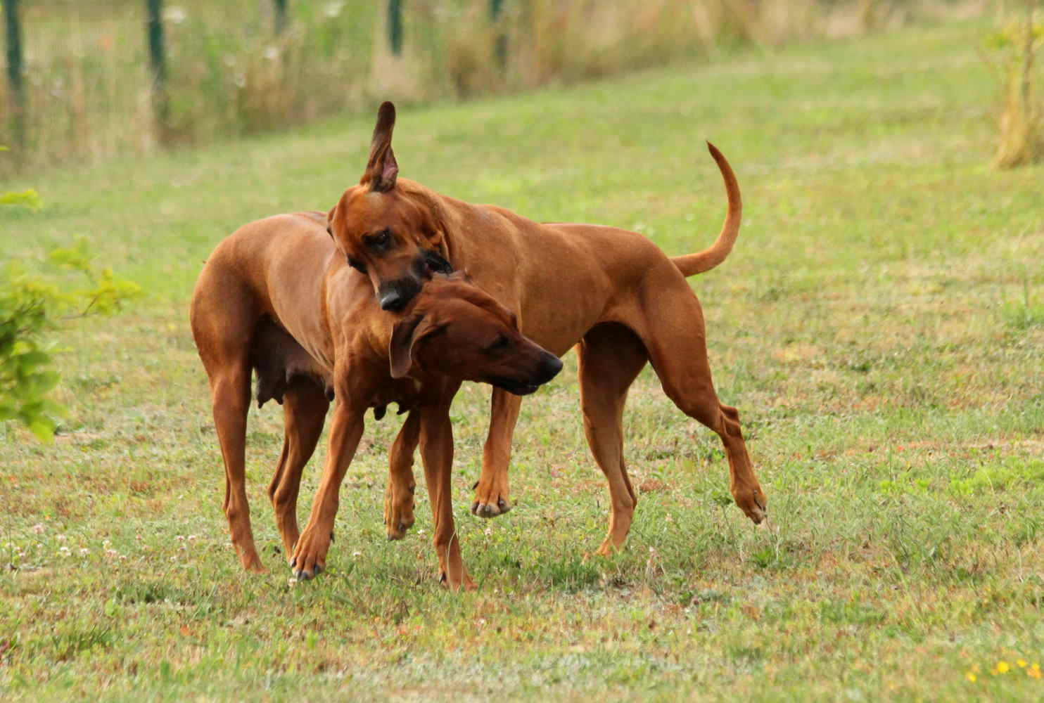 Hunde Juli1