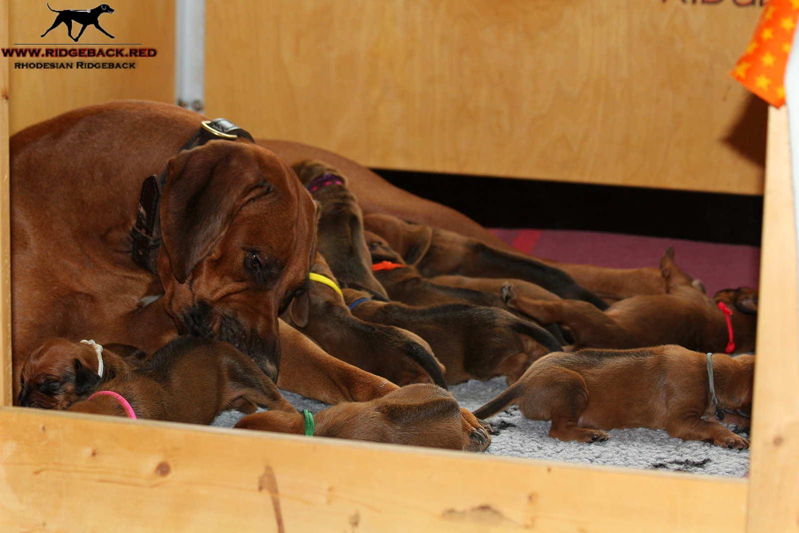 Jumay Babies 27.11.16_23