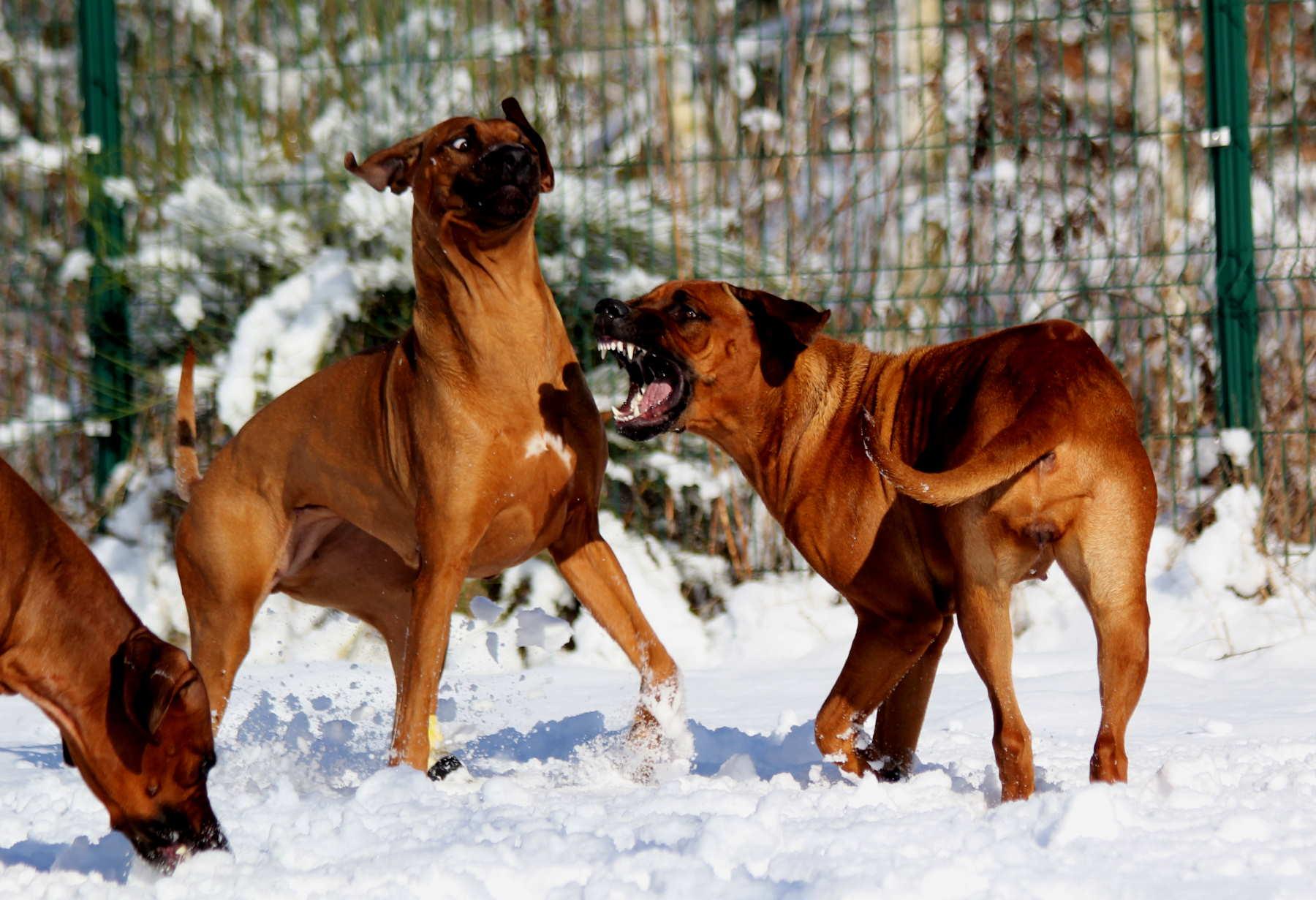 Hunde Garten 31.01.2019_0018
