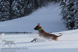 Maari Moyo Akinvoleezah Skiurlaub 2015 Guldner 19.jpg