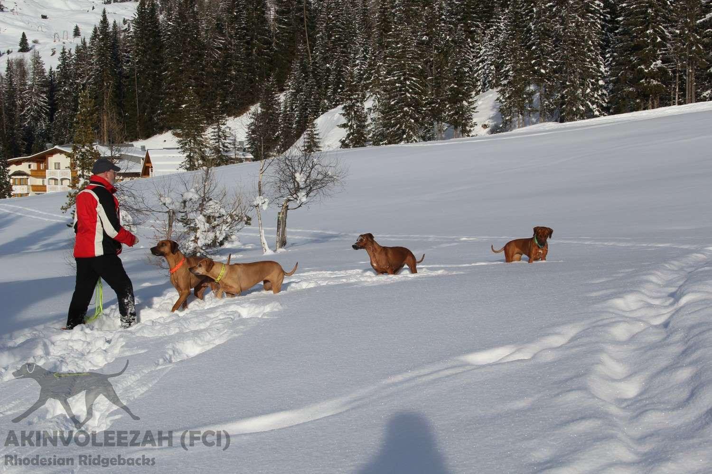 Akinvoleezah Skiurlaub 2015 Guldner 32.jpg