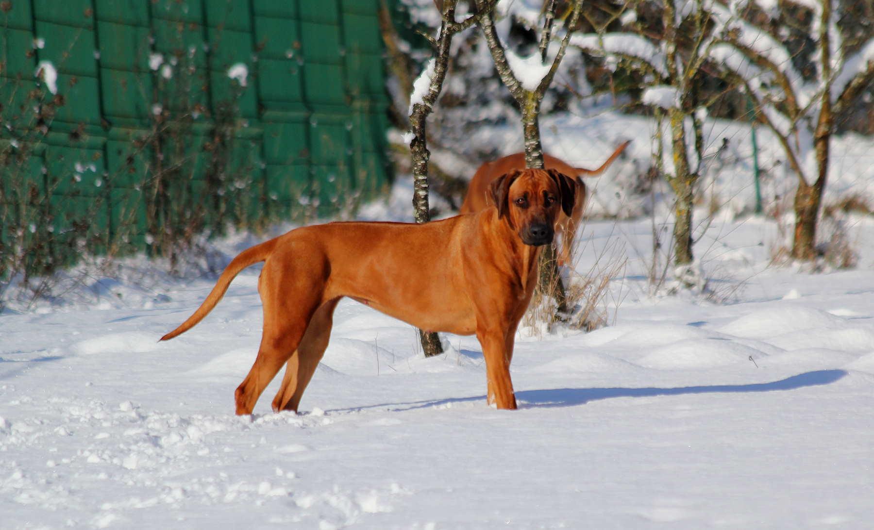 Hunde Garten 31.01.2019_0017