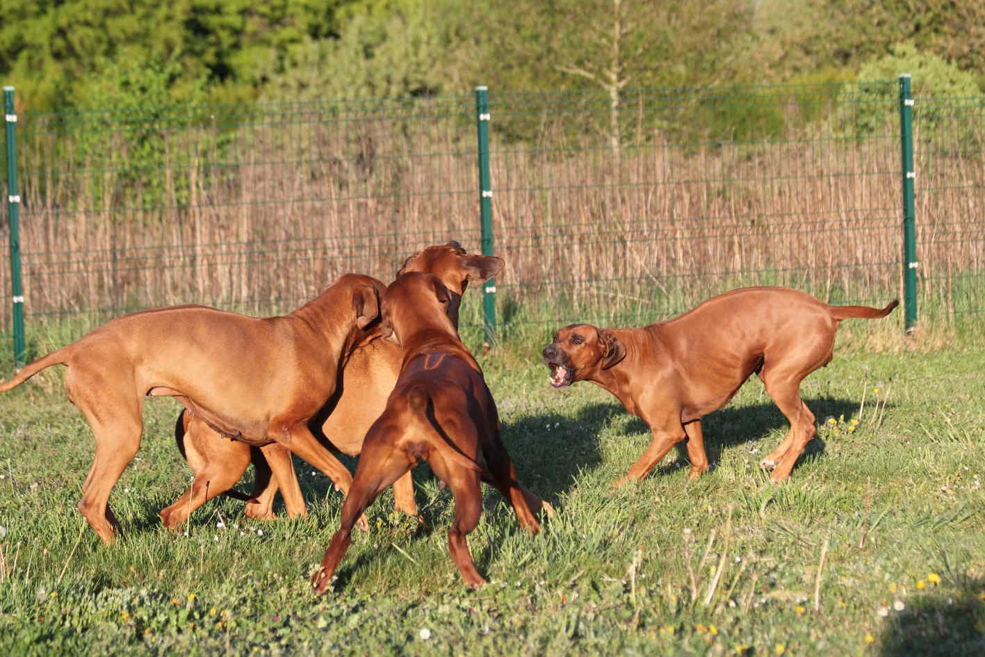 hunde-22-04-20-23jpg