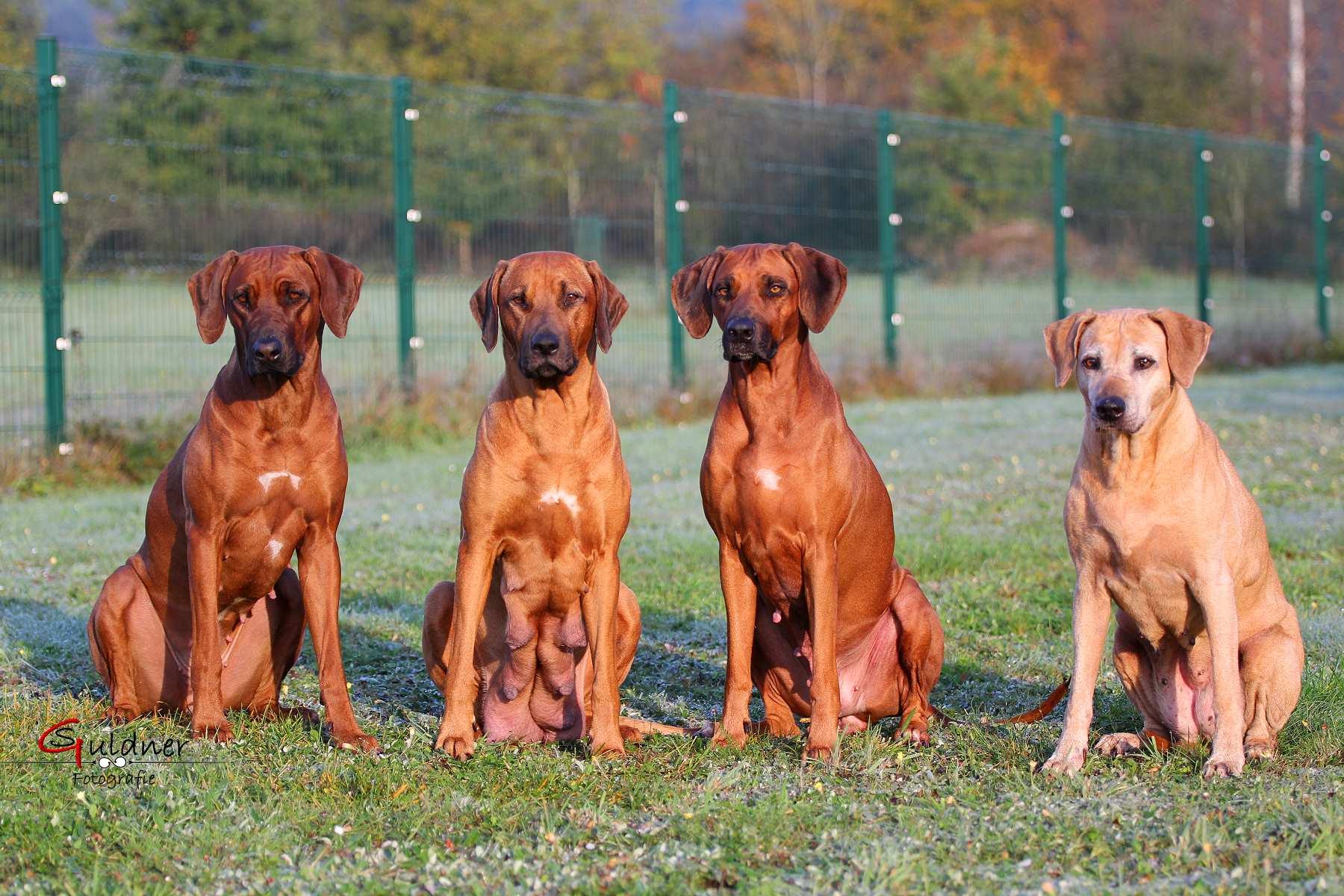 Hunde 18.10.17_j