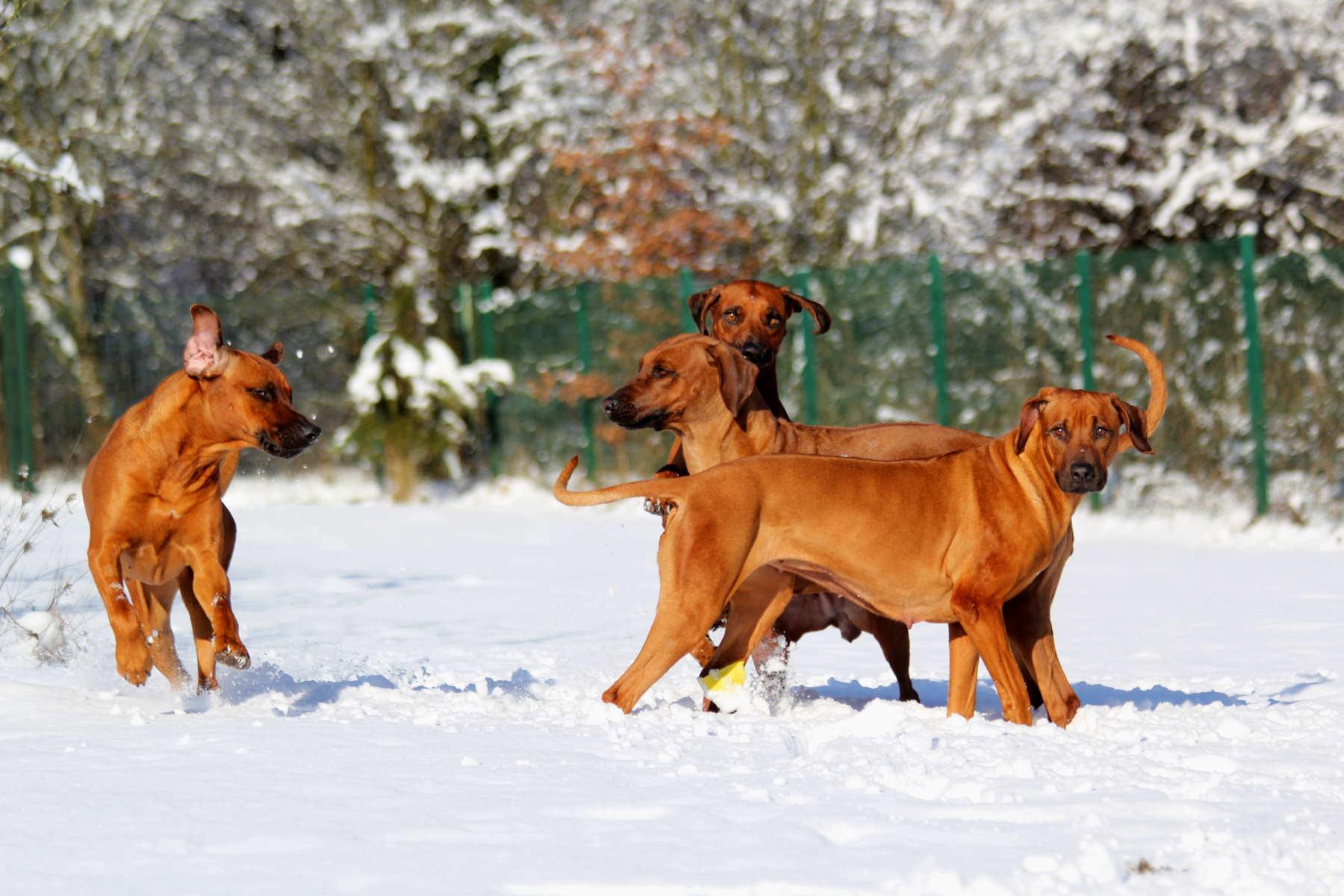 Hunde Garten 31.01.2019_0015