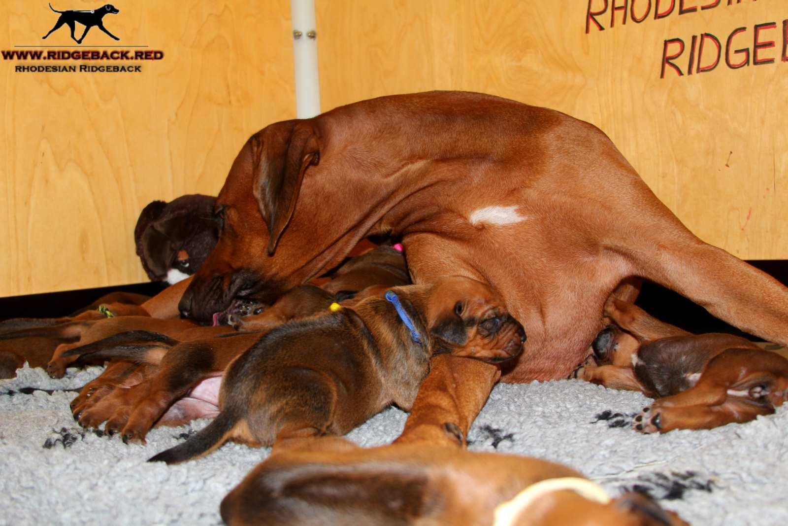 Jumay Babies 30.11.16_17