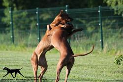 Akinvoleezah_dancing dogs_09.05.2015