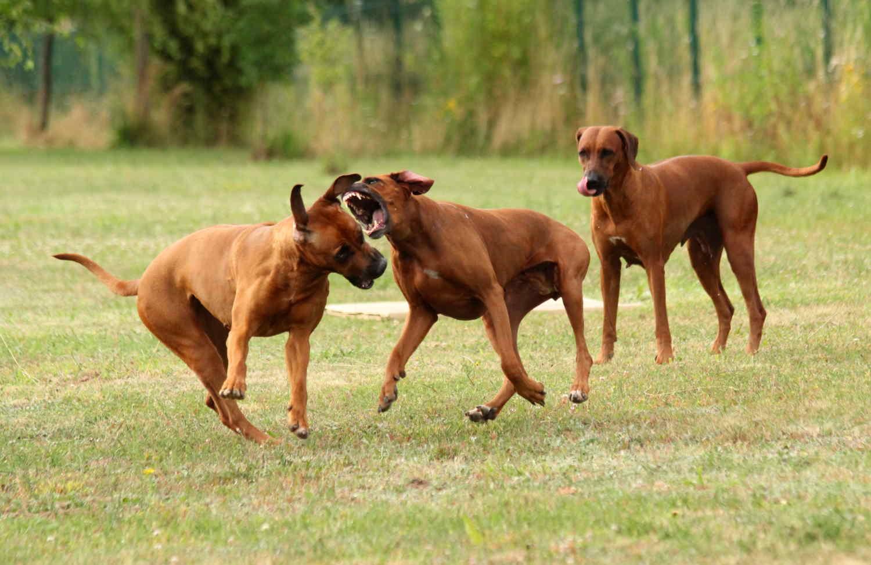Hunde Juli10