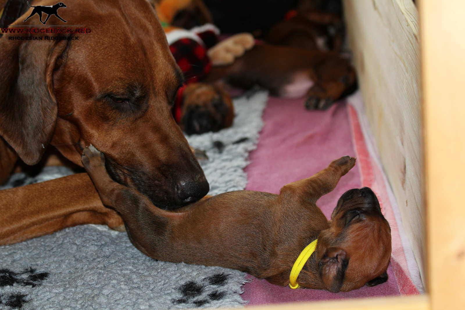 Jumay Babies 27.11.16_6