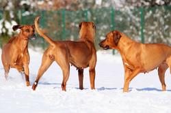 Hunde Garten 31.01.2019_0011