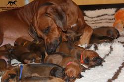 Jumay Babies 25.11.16q