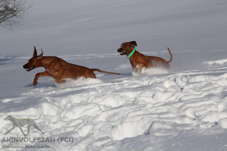Akinvoleezah Skiurlaub 2015 Guldner 34.jpg