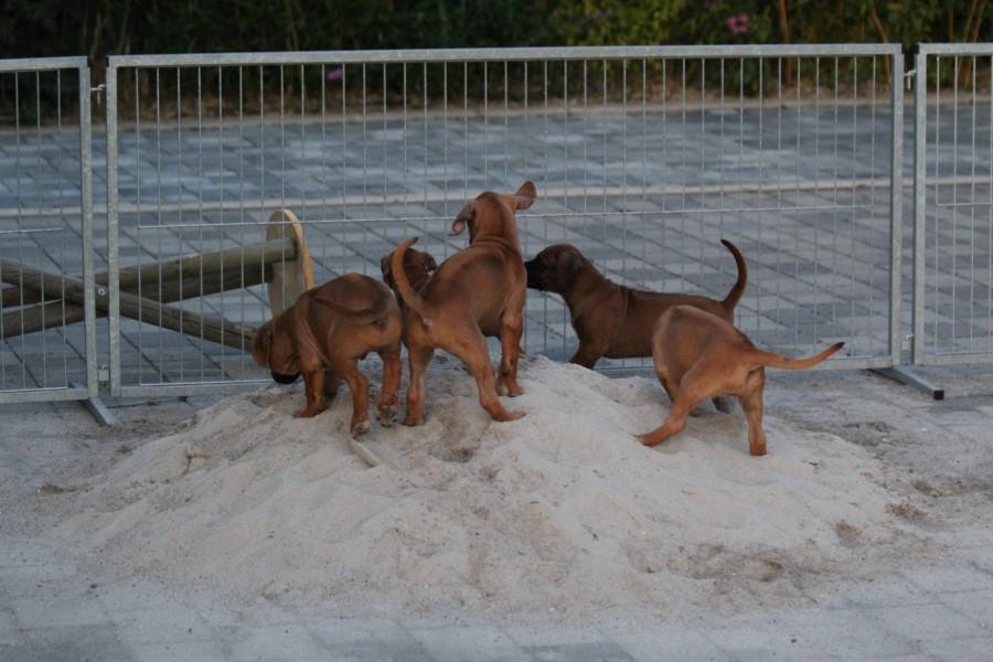 Sandkastenspiele3.jpg