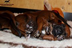 Jumay Babies 25.11.16f