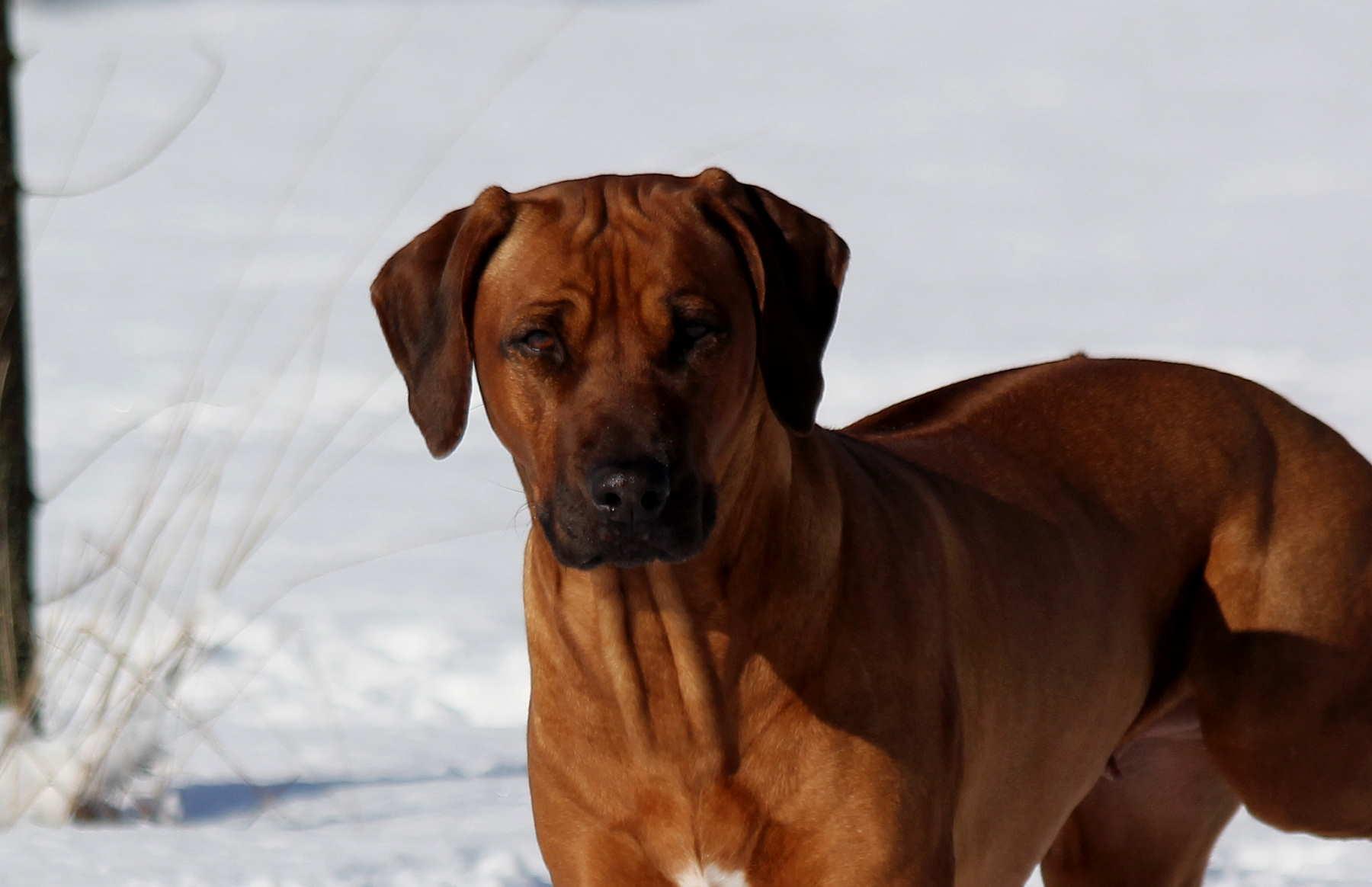 Hunde Garten 31.01.2019_0025