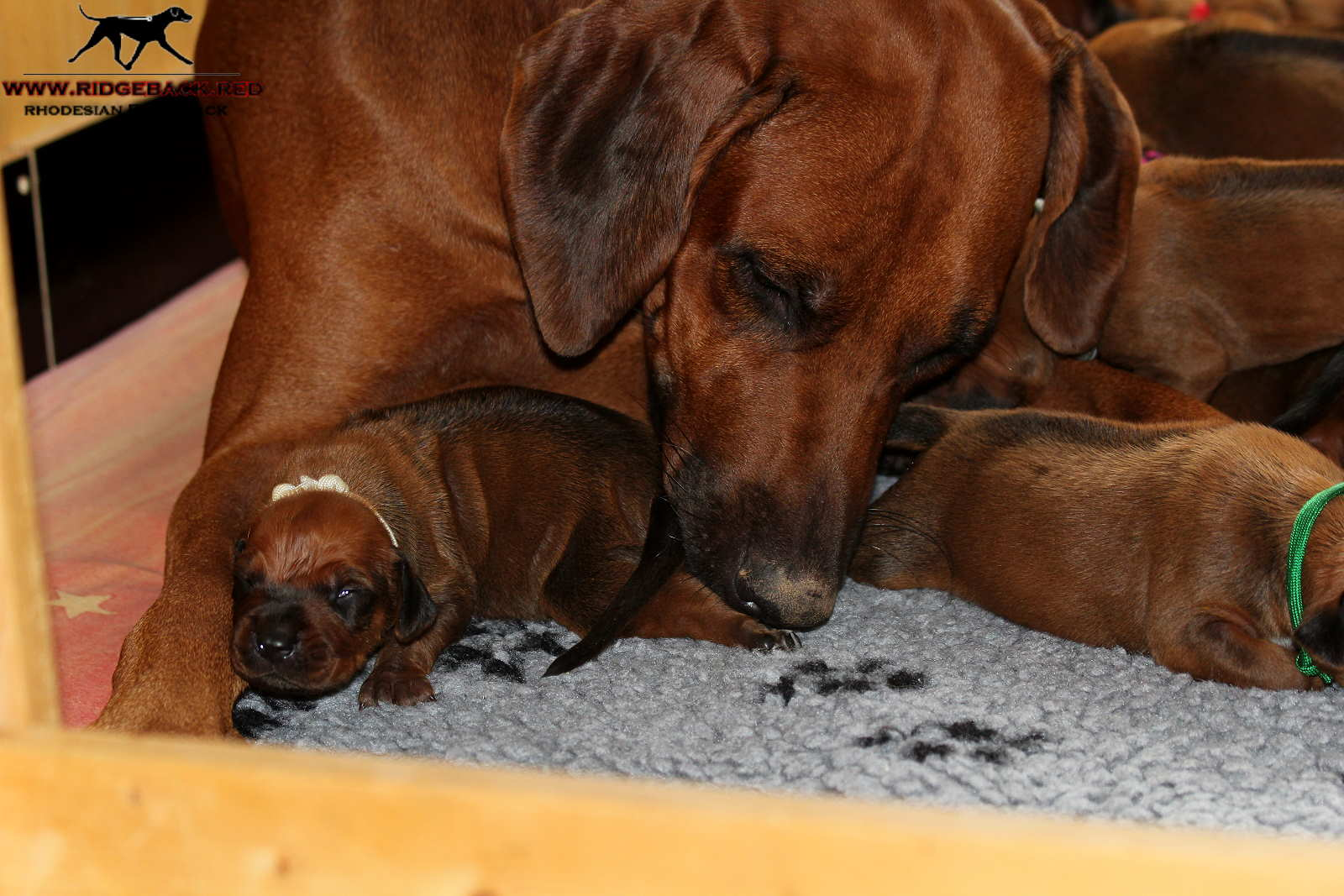 Jumay Babies 27.11.16_17