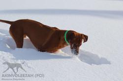 Maari Moyo Akinvoleezah Skiurlaub 2015 Guldner 25.jpg